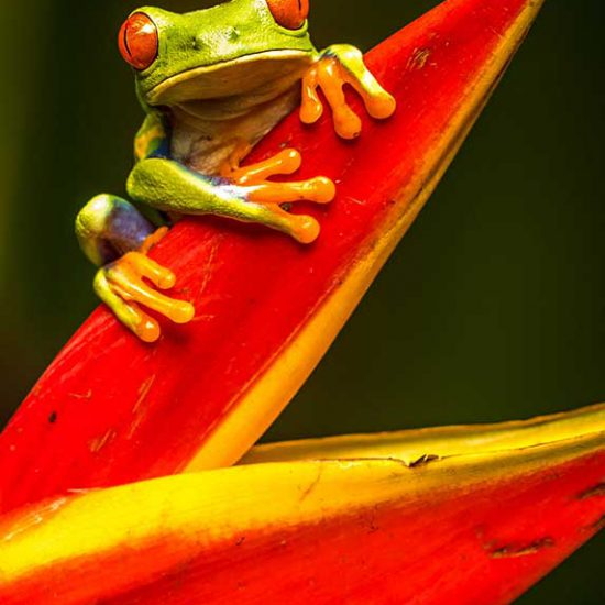 Vacances au Costa Rica. Aperçu de la destination