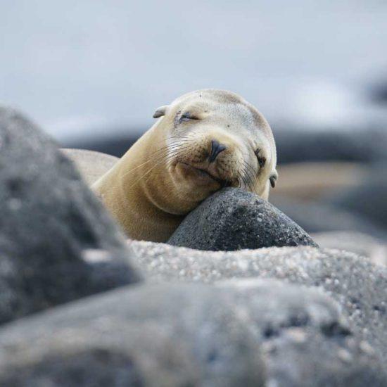 Eastern Galapagos Islands Exploration Cruise.