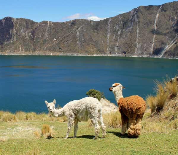 Ecuador holidays. Destination highlights and travel information