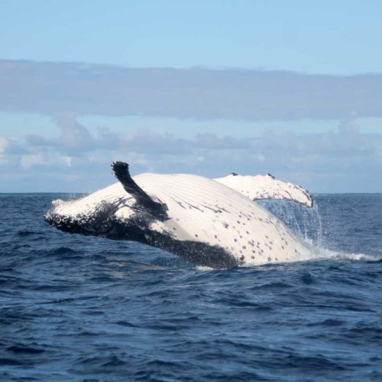 Gems of Iceland Tour with Whale watching