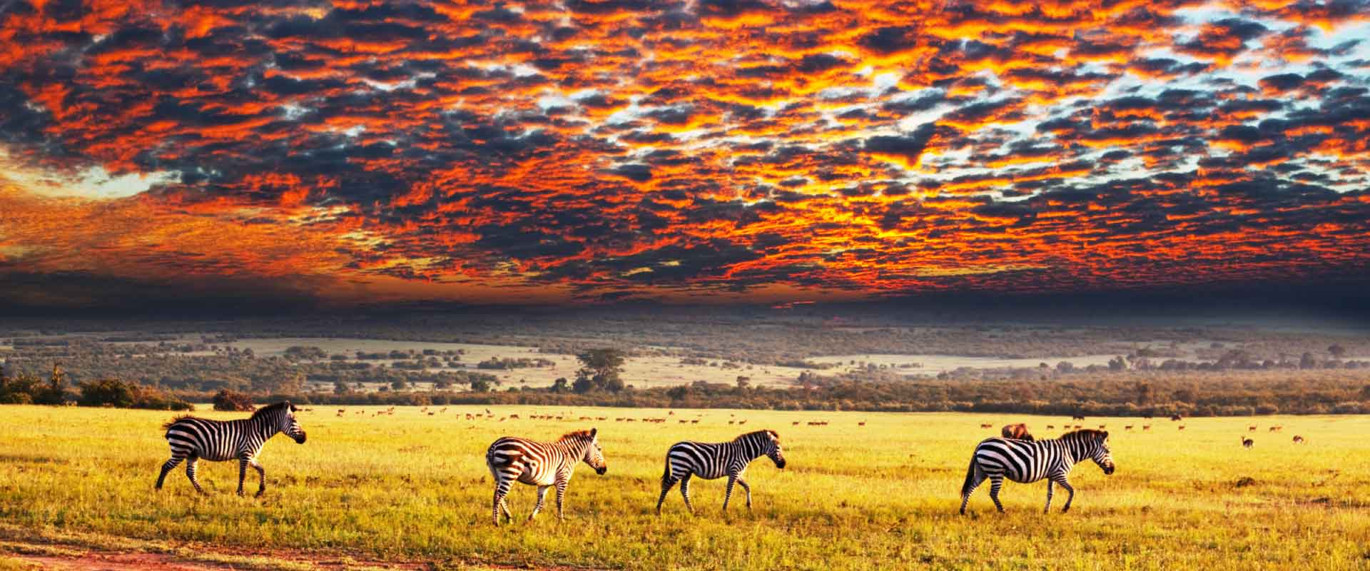 Grand Tour of South Africa