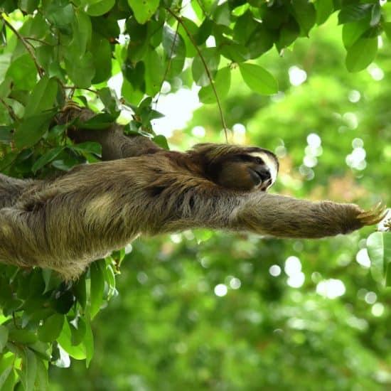 Natural Wonders of Costa Rica
